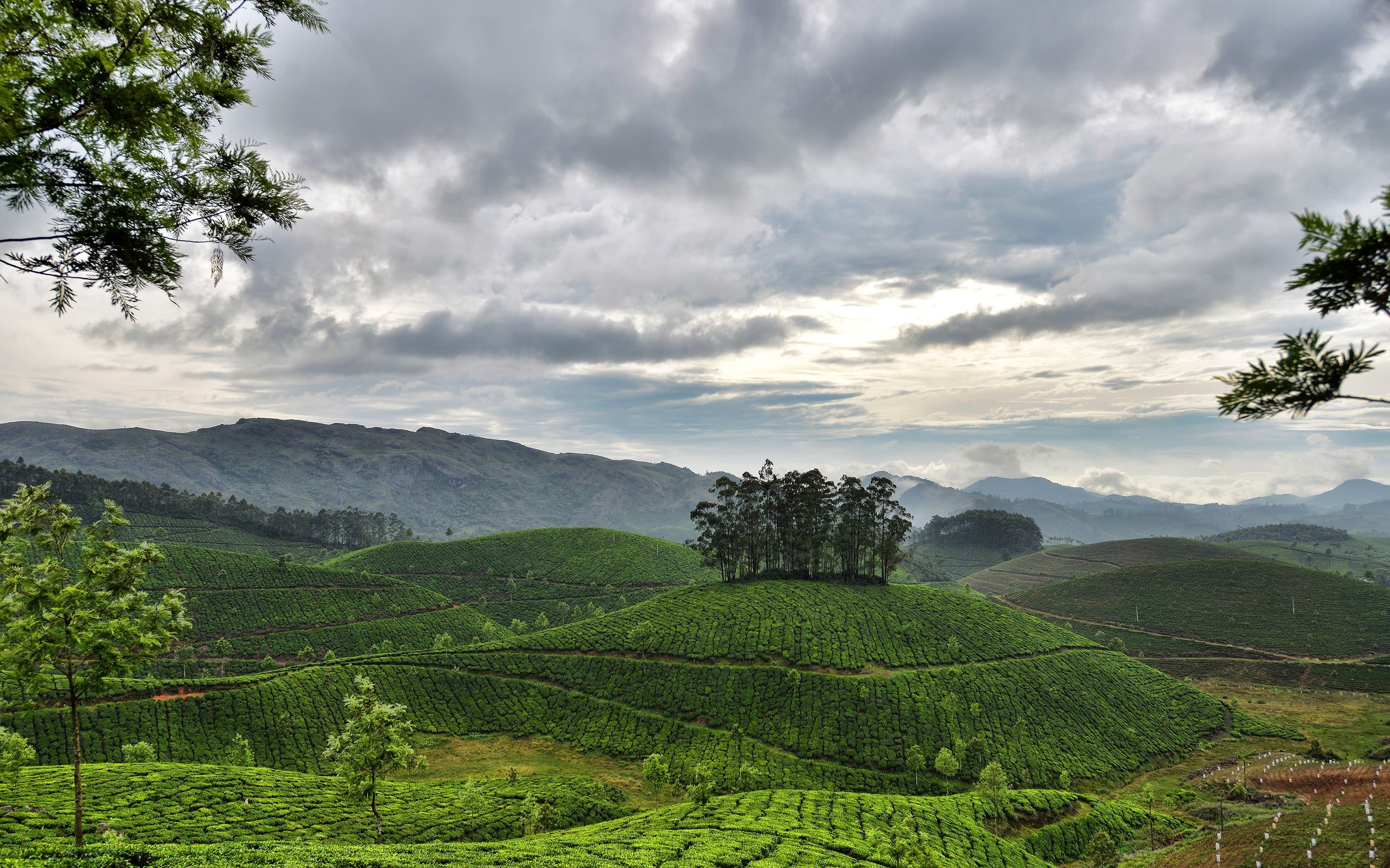 Green Trees During Day Time Photo Nature Landscape Hills Trees Clouds India Field Plants Mo Tea Garden Computer Wallpaper Desktop Wallpapers Wallpaper