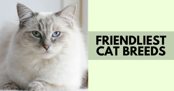 What Are The Friendliest Cat Breeds? Cat breeds, Cats