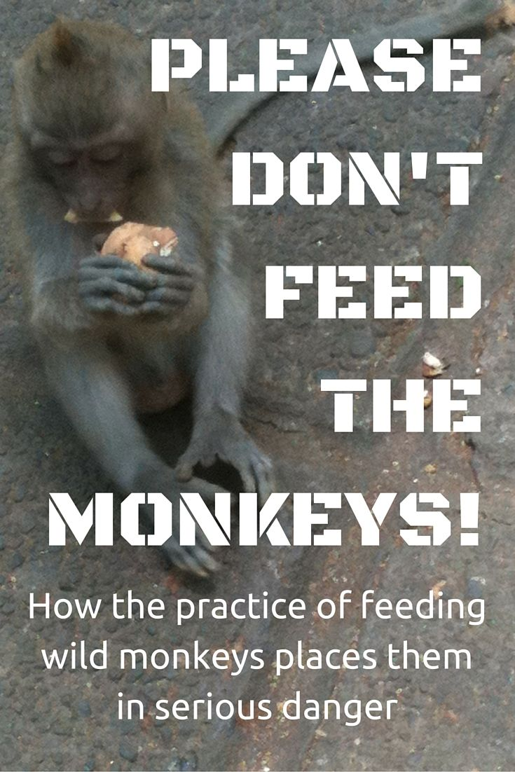 Please Don't Feed The Monkeys! Why wild monkey feeding causes harm to our…
