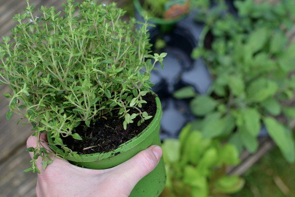 Want to Grow an Herb Garden  Follow These (Easy) Steps is part of Herb garden, Herbs, Vertical garden, Garden, Vertical garden diy, Harvesting herbs - Growing an herb garden is a fun and easy project when you follow a few, simple steps  Here's where to start