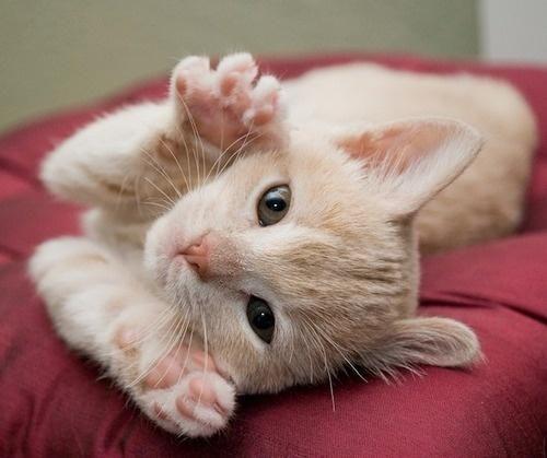 Peek A Boo Bezaubernde Katzchen Katzenbabys Hubsche Katzen