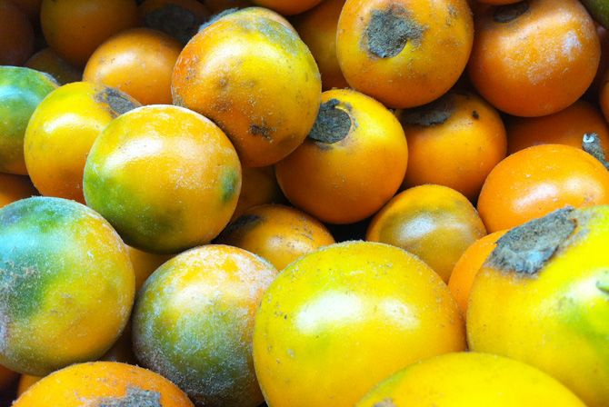 exotic mexican fruits lulo.JPG