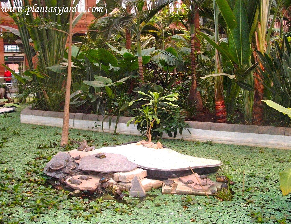 Estanque con tortugas y plantas acu ticas en el jard n for Estanque tortugas