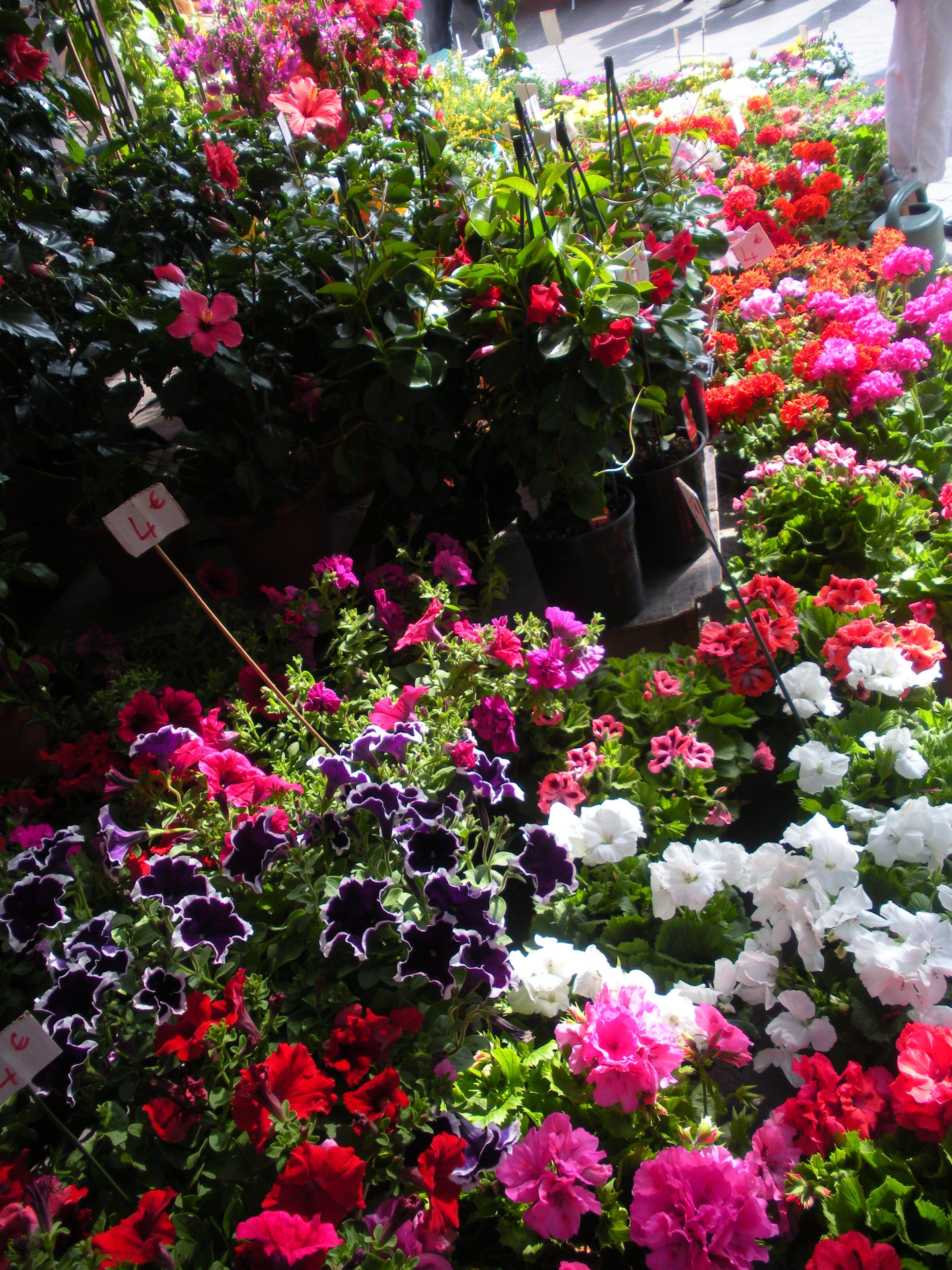 Flower Market in Ireland!!