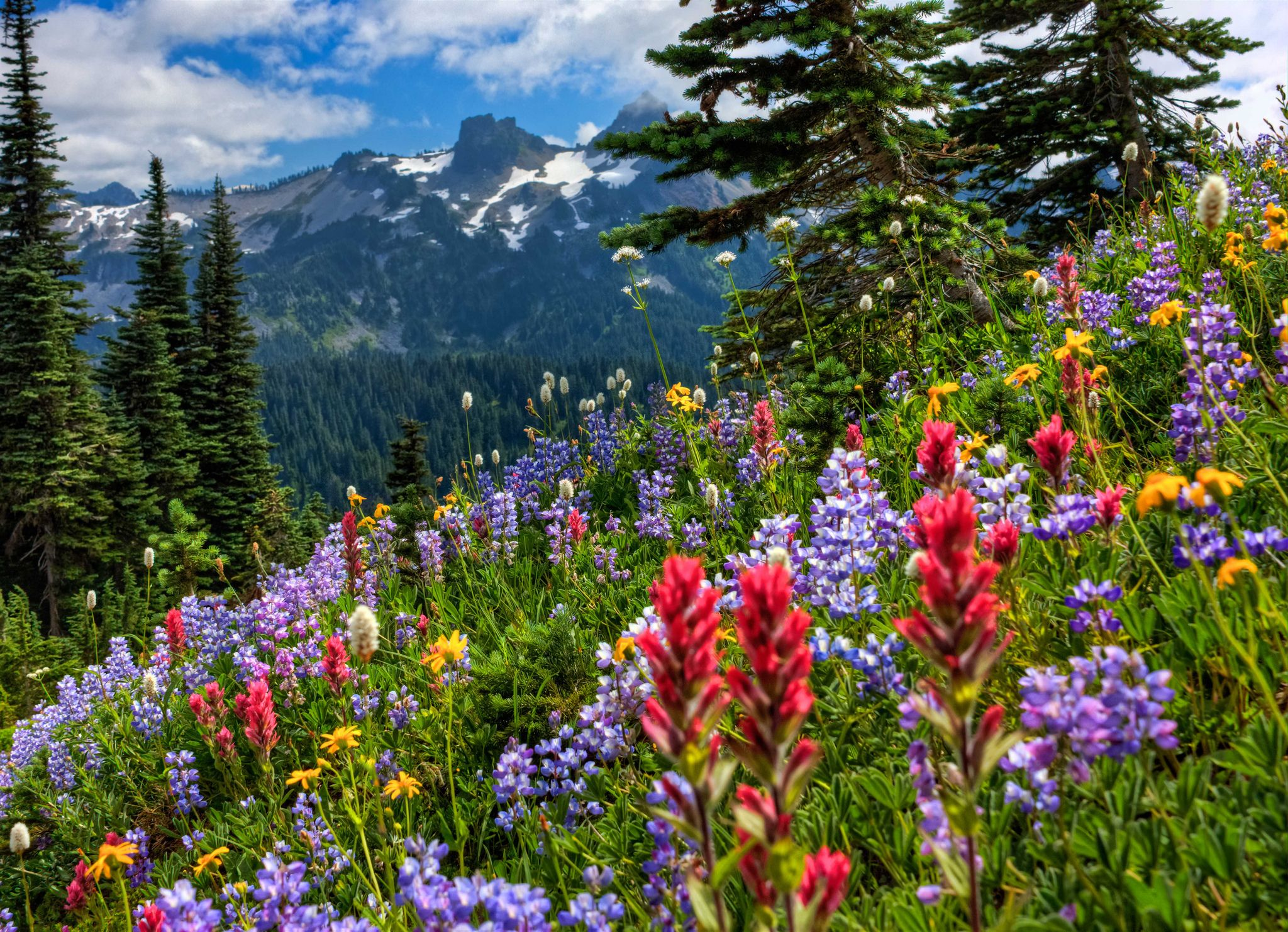 Mount Rainier National Park mountains meadow flowers