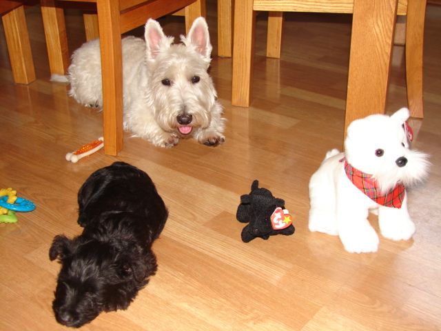 All right, so we were lame and matched up the Ty Beanie babies next to our puppies!
