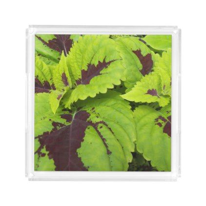 Coleus Leaves Floral Acrylic Tray - floral gifts flower flowers gift ideas