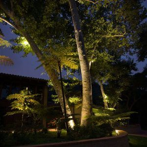 Outdoor up lighting for trees httpnawazshariffo pinterest outdoor up lighting for trees aloadofball Image collections