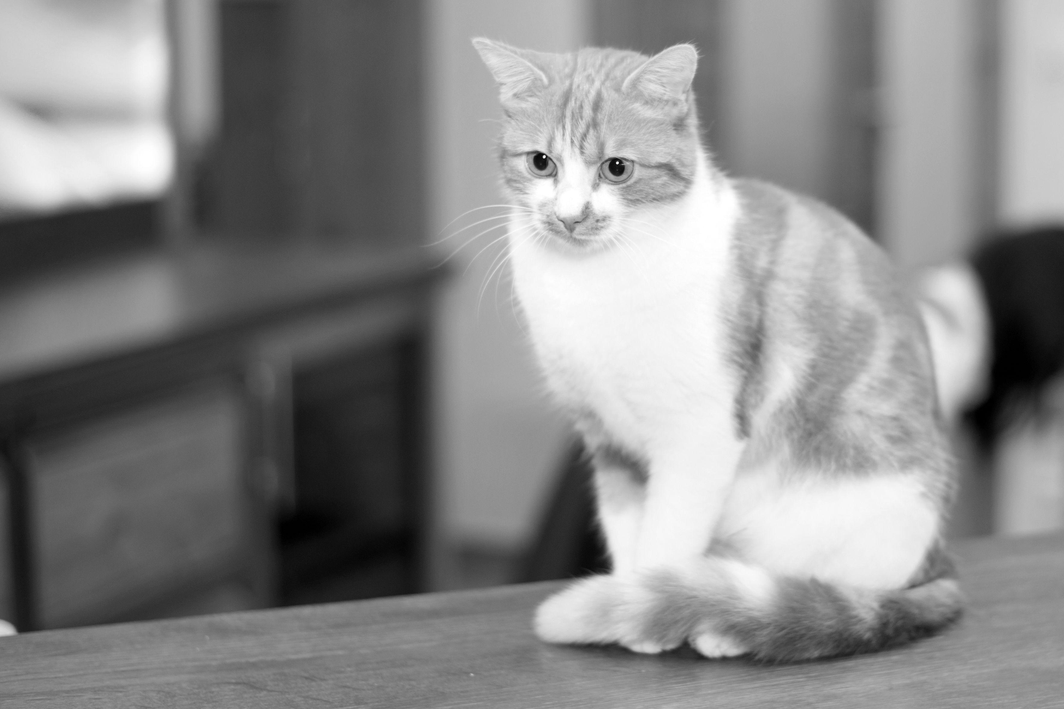 Unsere Hauskatze Kiki (mit Bildern) Hauskatze, Katzen