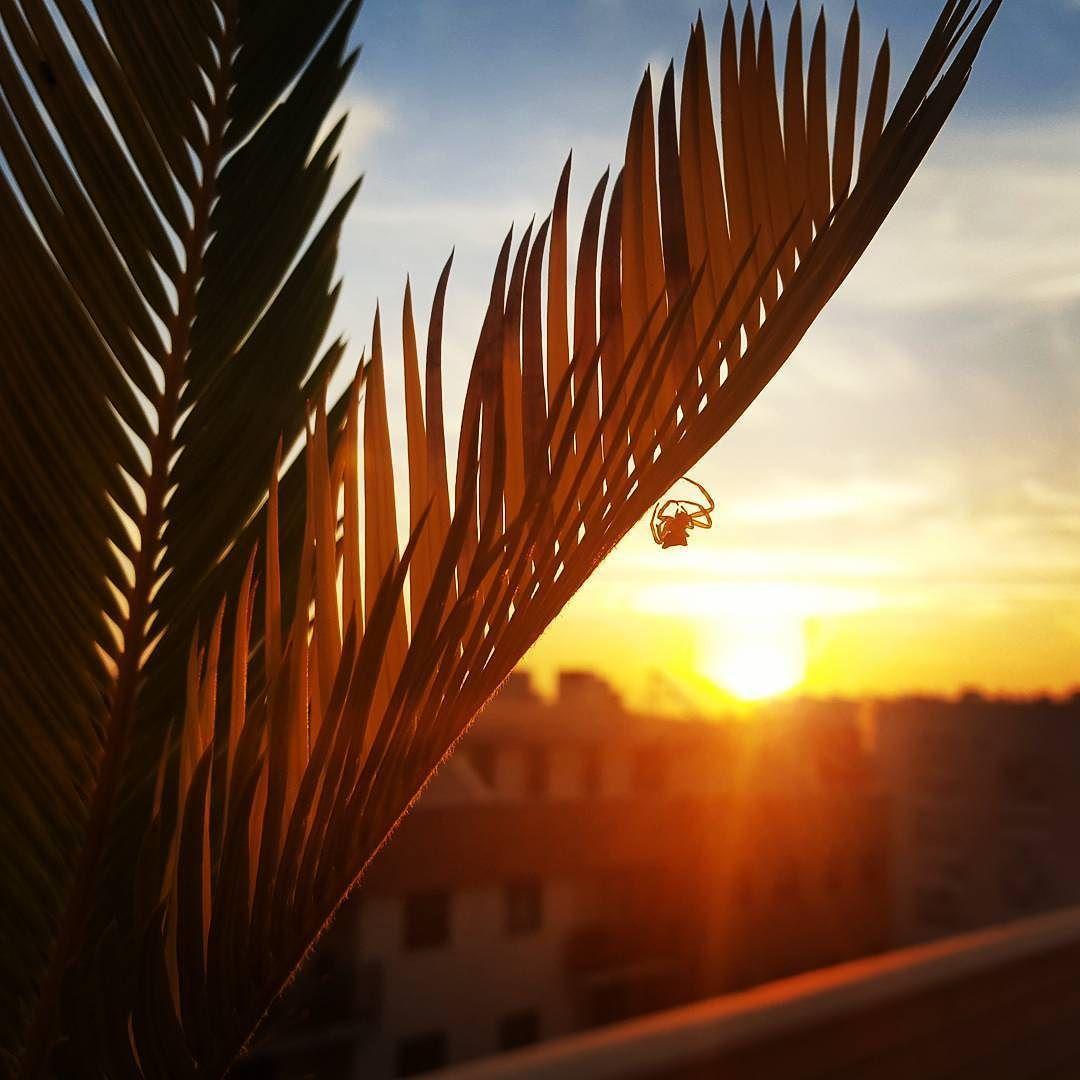 La araña y el Sol. #diariodeuninstagramer