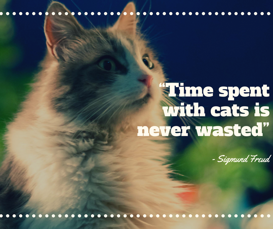 Pin by Quality Veterinarians Near You on Pet Lover Quotes