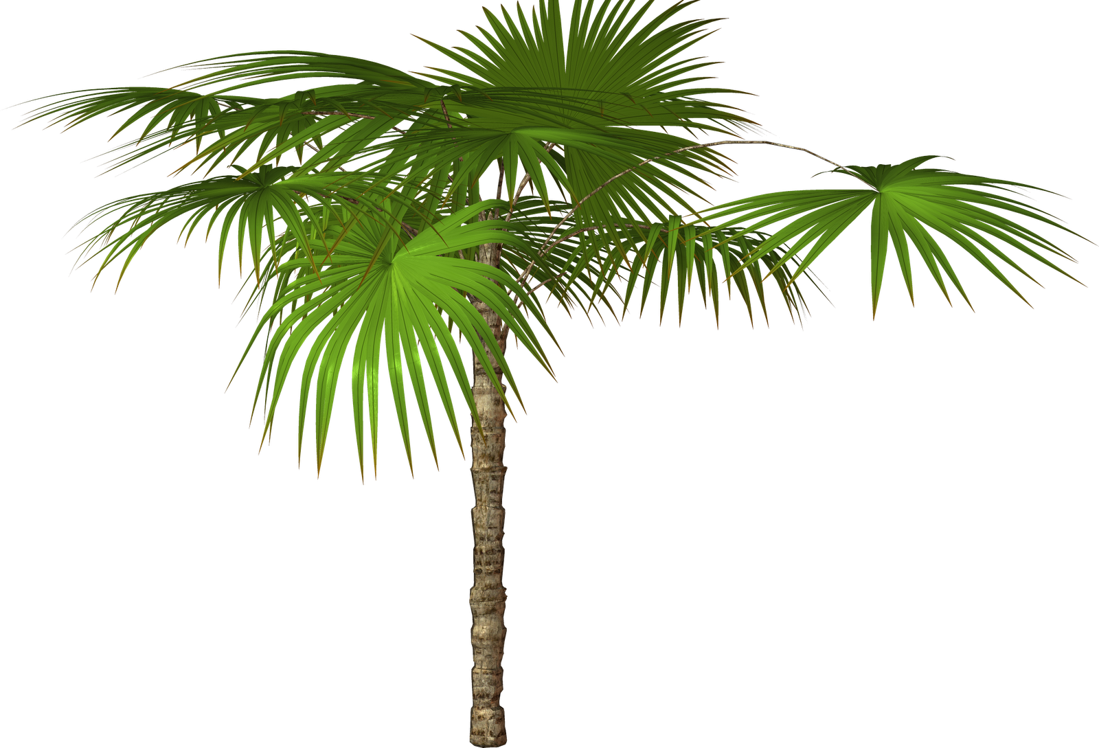 Palm tree and free png flower clipart (With images