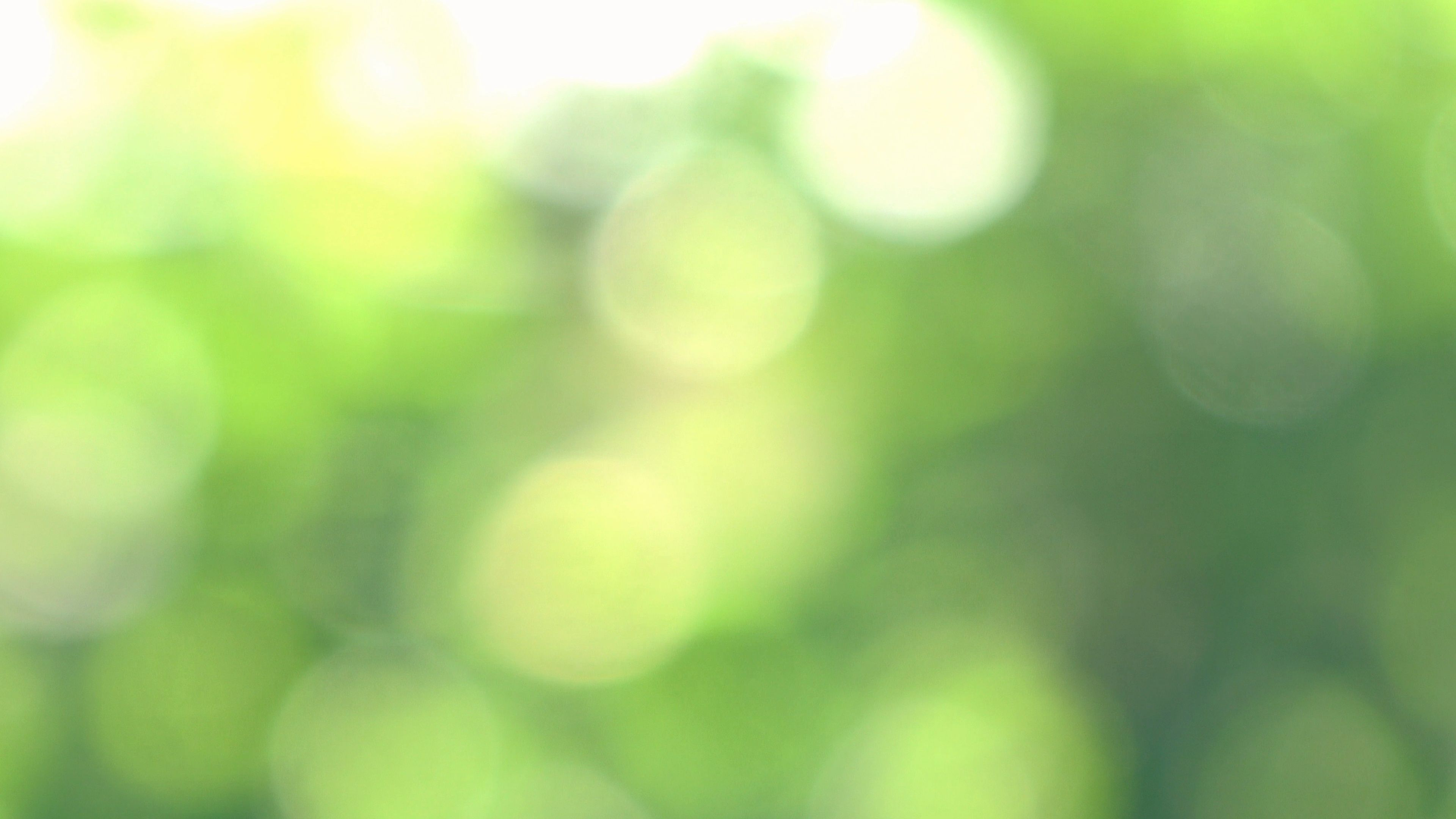 Abstract Nature Background Bokeh Footage Of Glowing Green Leaves In Sunlight Stock Footage Bokeh Footage Nature Backgrounds Abstract Nature Bokeh Background
