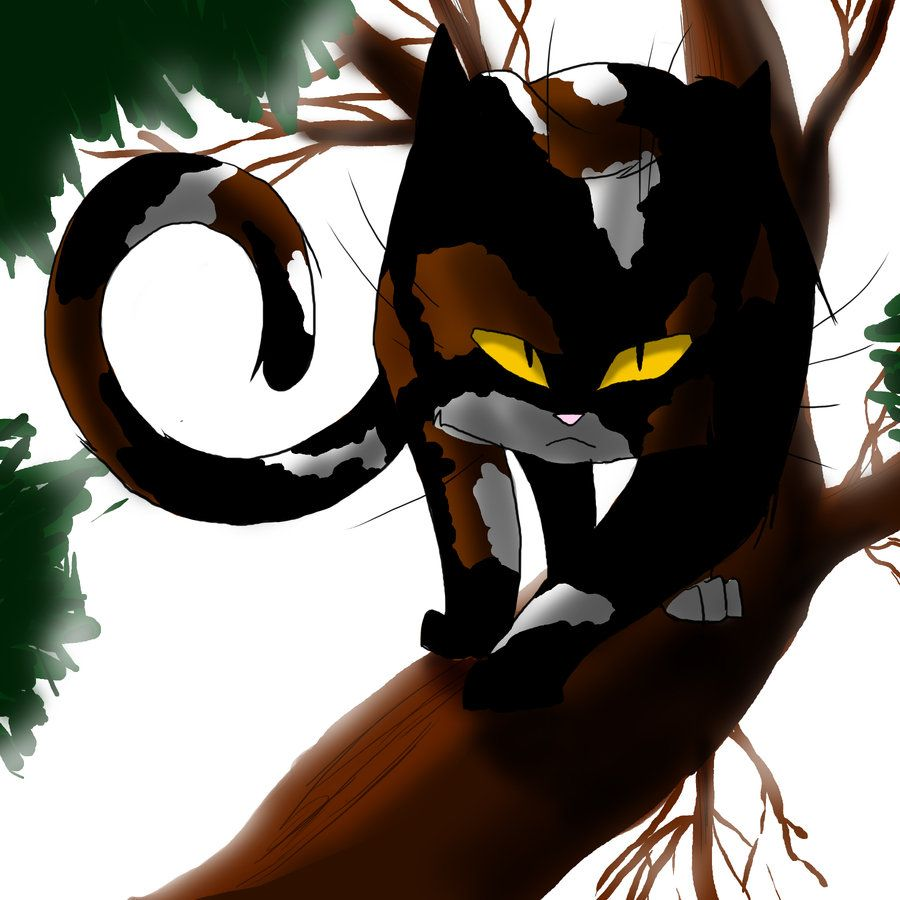 Warrior Cats Sol By WhiteFlameSoul On DeviantART