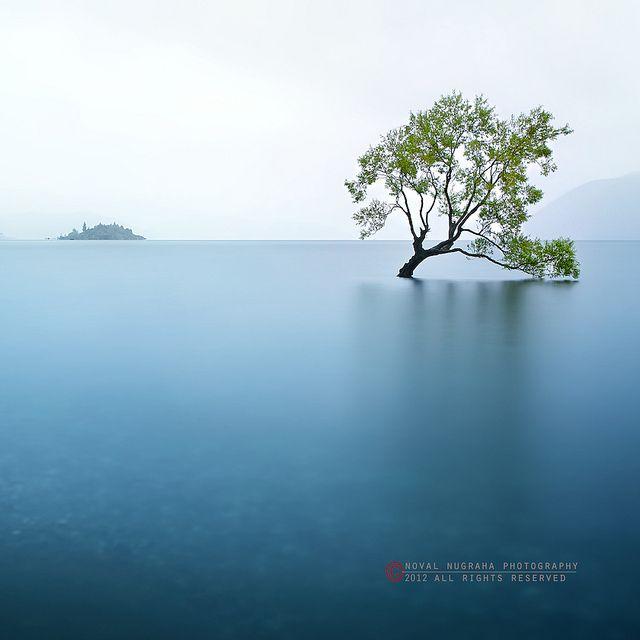 Tree Of Life, via Flickr.