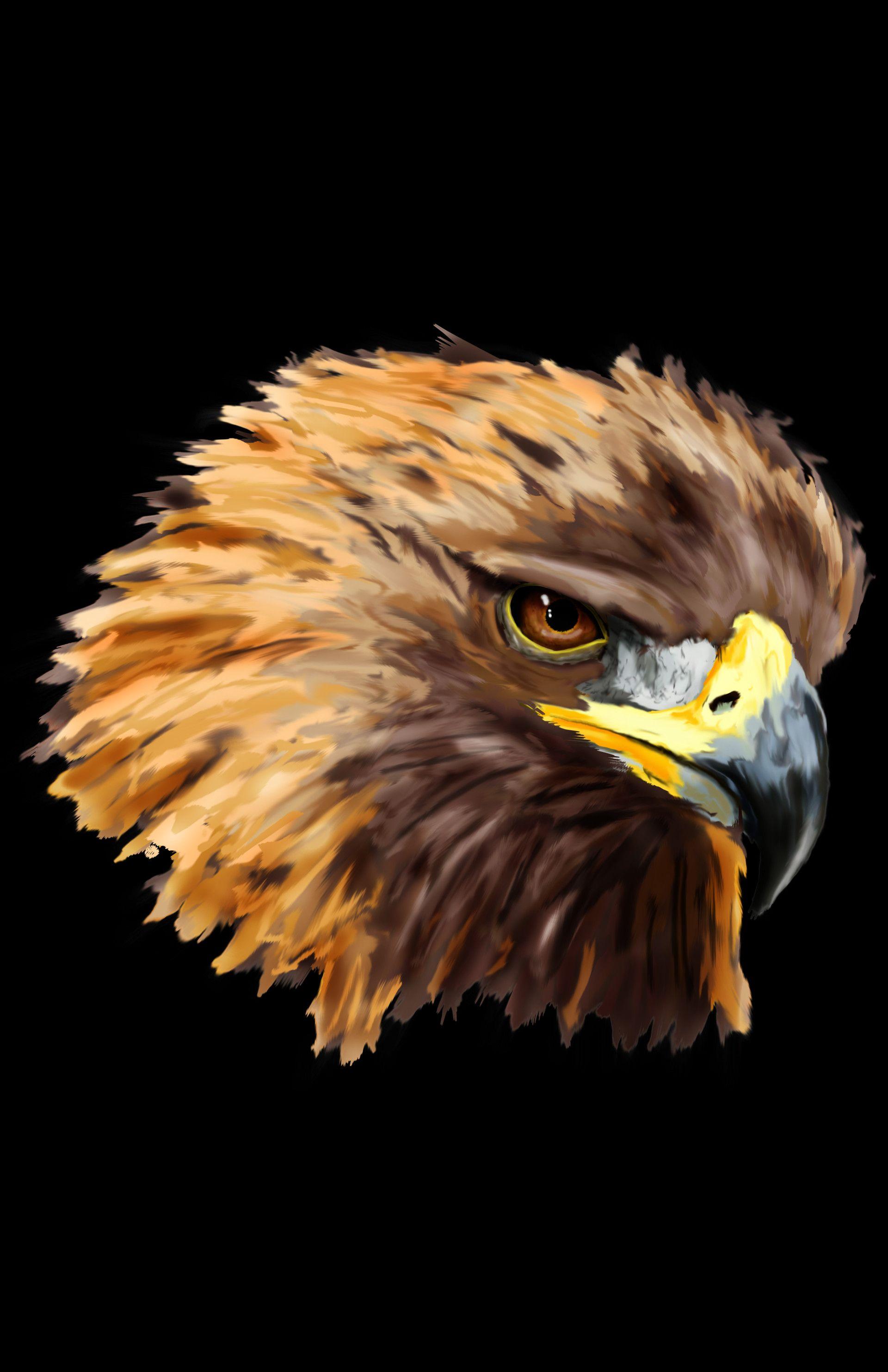 ArtStation - Golden Eagle Head Painting, Jayden McLeod | Animal Art ...