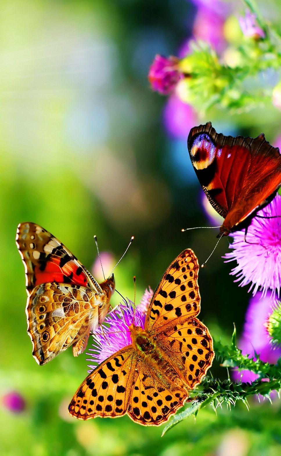 Best Butterflies iPhone Wallpaper | Beautiful butterflies ...