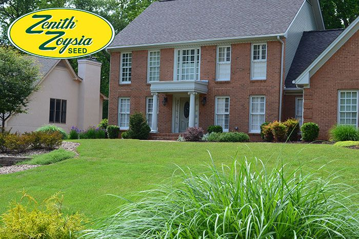 A Zenith Zoysia Lawn From Seed Backyard Renovations Lawn Seeds