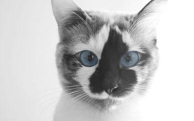••This Kitty•• | via Tumblr