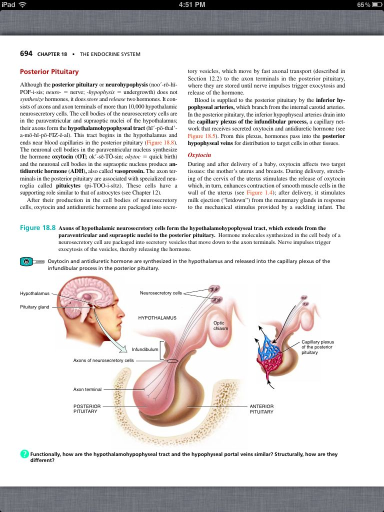 Principles of Anatomy and Physiology, Chapter 18, The Endocrine ...
