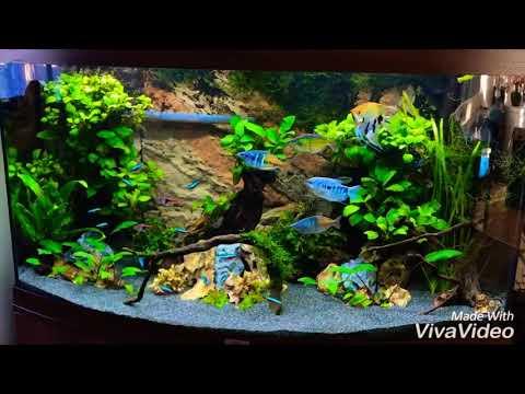 2607 Juwel Vision 180 Update Youtube Aquarium Design Fish Tank Visions
