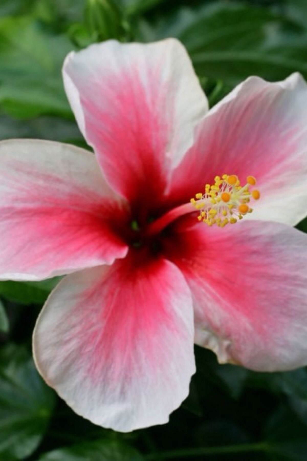 So coool luv this flower reminds me of hawaii flora landscapes so coool luv this flower reminds me of hawaii izmirmasajfo