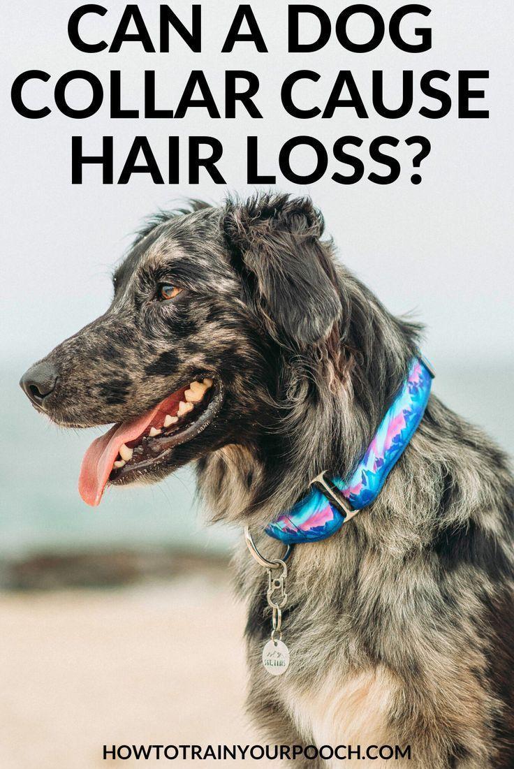 Best dog training collars of 2019 dog training collar