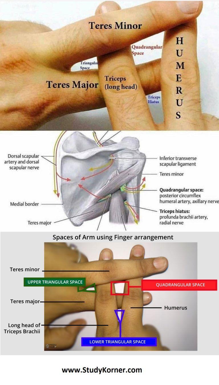 dureri de cot triceps