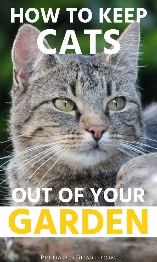 How To Keep Cats Out of Your Garden - Predator Guard #cats ...