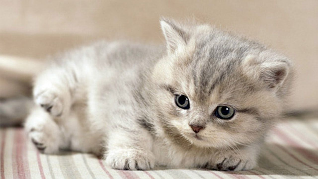 Mama Cat Takes Care Of Her New Born Kittens Youtube Katzen Bienen