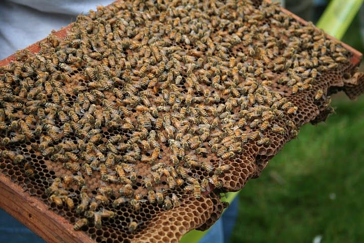 Bees for days! Whether you're a beginner or seasoned beekeeper, Rutgers OCPE offers beekeeping courses for you in NJ #NJBeekeeping