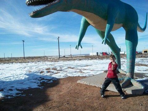 En el Parque Nacional de fosiles petrificados,Zona Volcanica,NM.