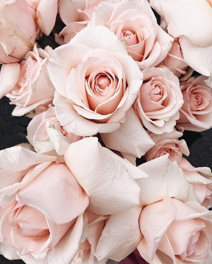 p i n t e r e s t || muriloguterres | Pink roses background, Roses pinterest, Aesthetic roses