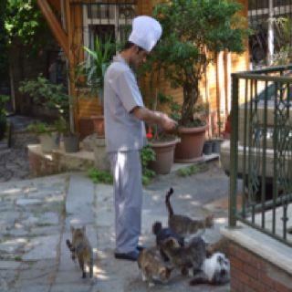 Feeding the cats, Istanbul