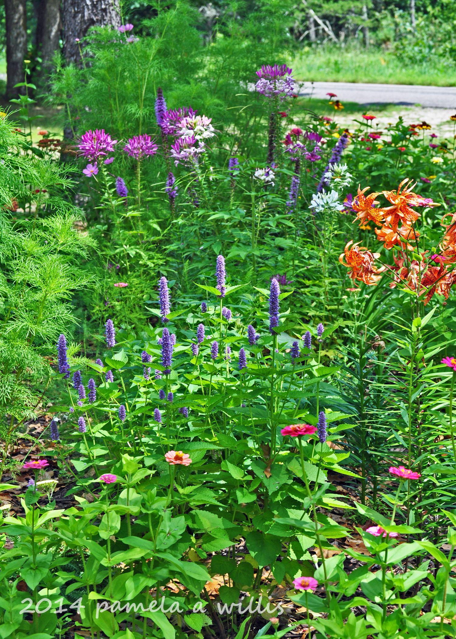 Flower Garden Ideas Wisconsin our cottage garden+wisconsin. zinnias, tiger lilies, hyssop