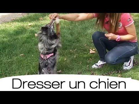 apprendre son chien faire le beau youtube dressage dogs yorkshire terrier et terrier. Black Bedroom Furniture Sets. Home Design Ideas