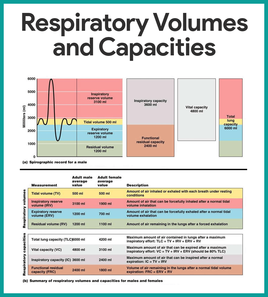 physiology respiratory The respiratory system, also called the gas exchange system, is the body getting rid of carbon dioxide and taking in oxygencarbon dioxide, a.