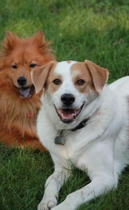 â?? Adoption fee 325 Sweet and gentle Good with dogs