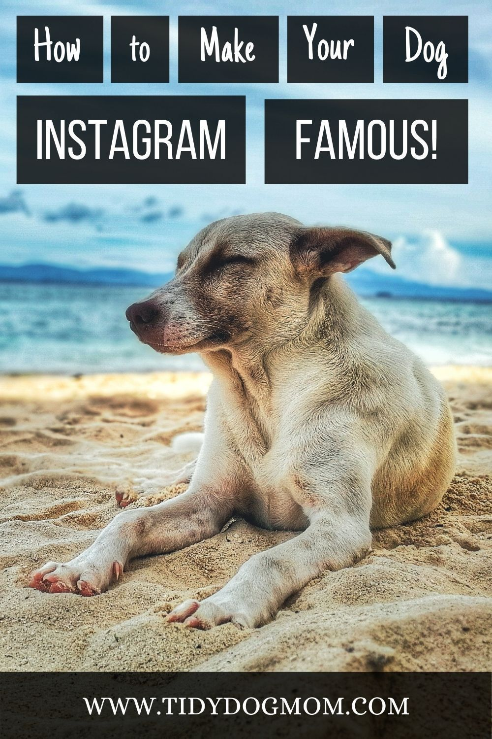 How To Make Your Dog Instagram Famous Tidy Dog Mom Your Dog I Love Dogs Dog Mom