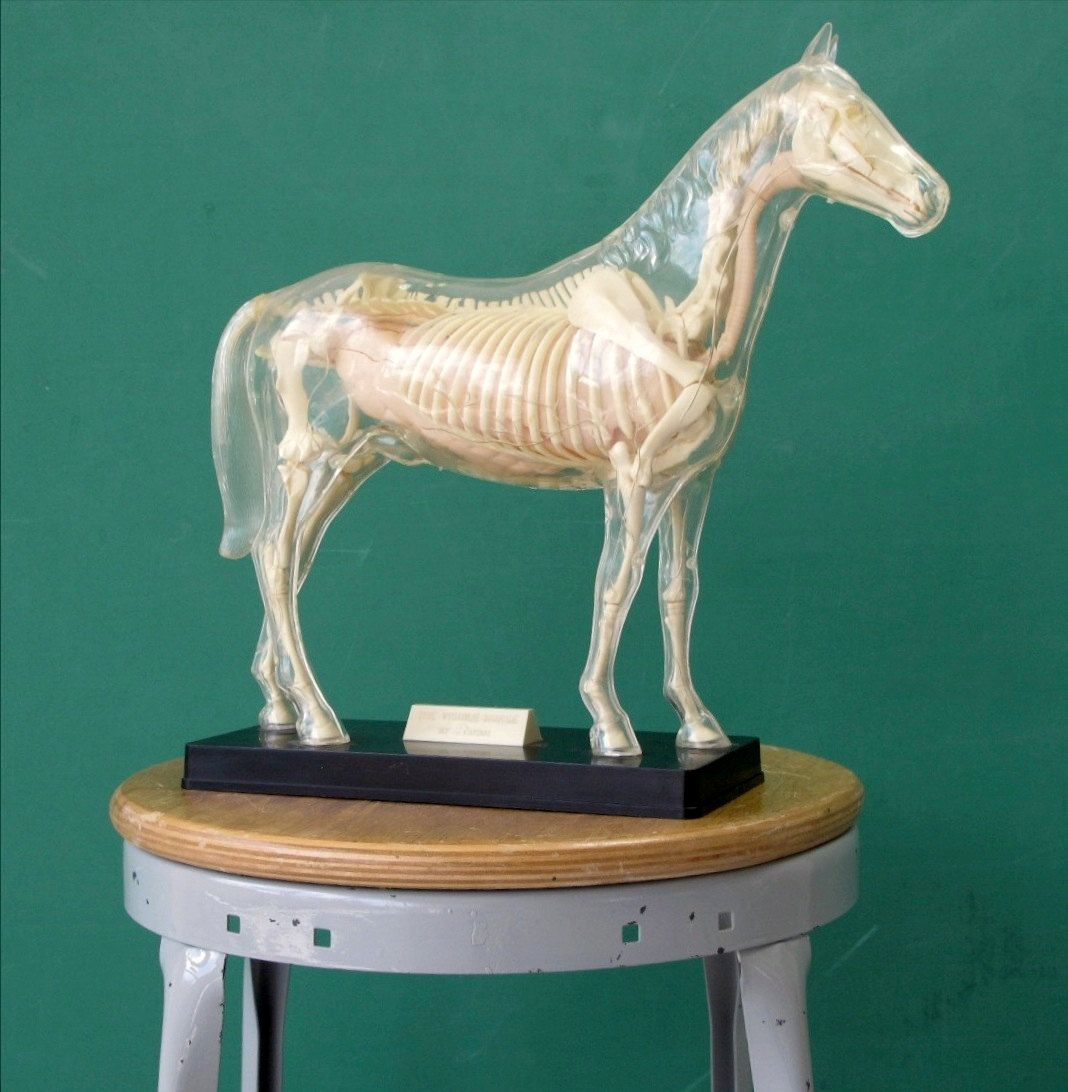 1950\'s Visible Horse Model by Renwal, Completely Assembled, Plastic ...
