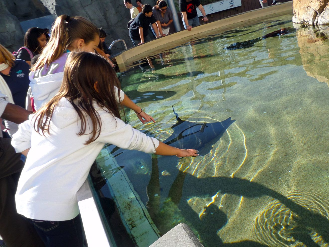Things To Do With Kids In Los Angeles The Aquariumlong Beach