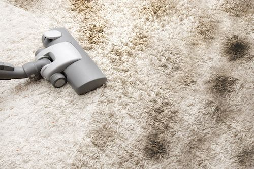 Have Your Carpets Looking Brand New With Carpet Cleaning Sunshine Coast Pro Budget Stain Removal