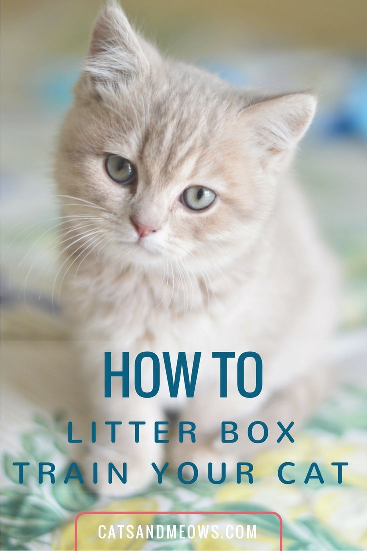 How To Litter Box Train Your Cat We Have The Answers Cats And Meows Kittens Cutest Cats Cute Cats