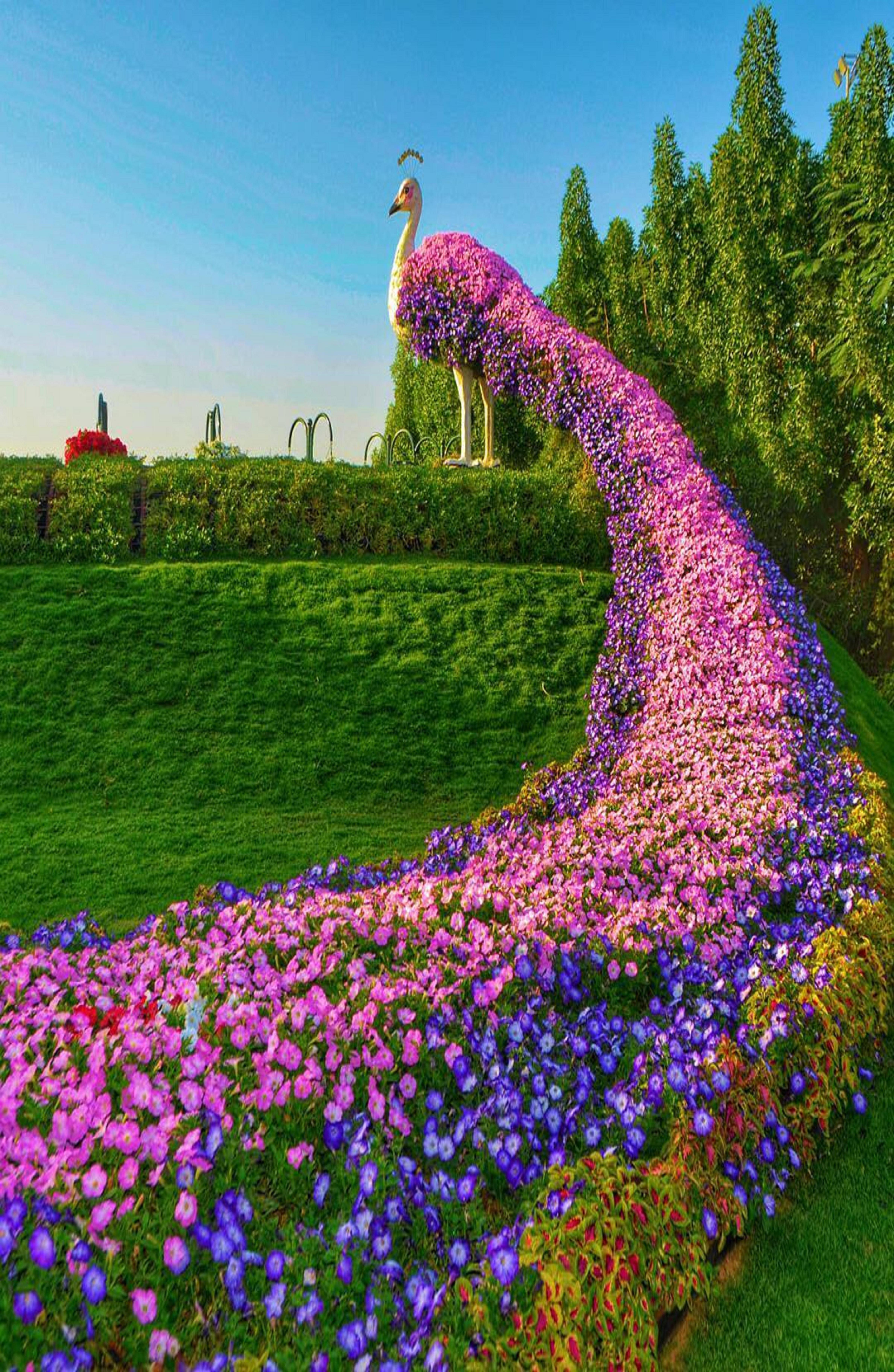 Dubai,Miracle Garden Miracle garden, Topiary garden