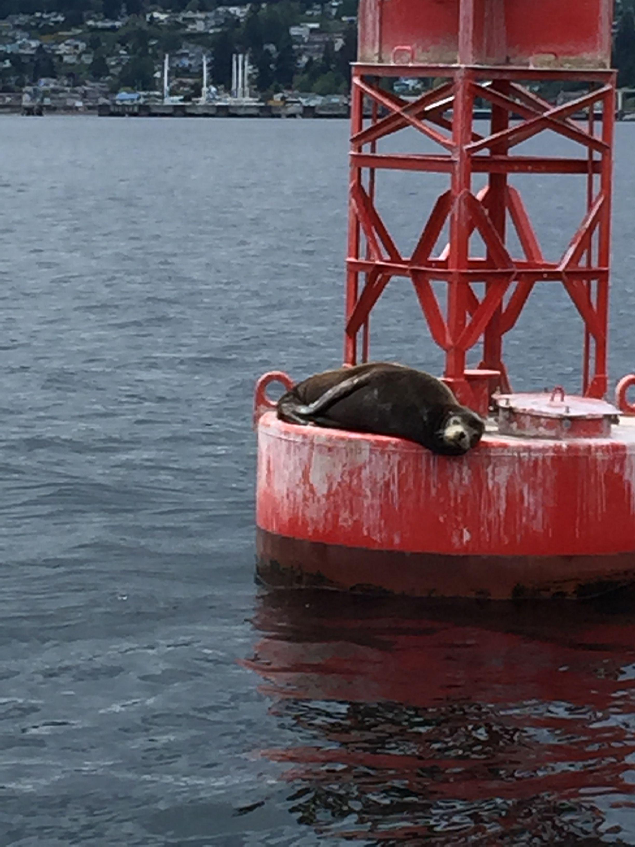 Pin von Marlani Hewett auf Puget Sound Fishing   Pinterest