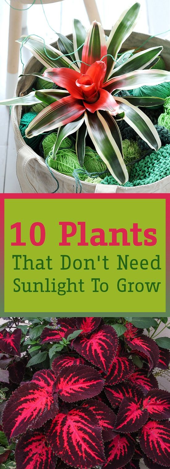 10 plants that don 39 t need sunlight to grow v xter