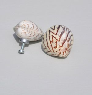 Shell knobs