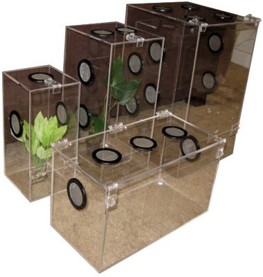 Acrylic Tarantula Enclosure I Would Love At Least One Or Two Of These With Images Tarantula Enclosure