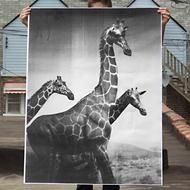 Giraffes Poster by Pieces @Luvocracy
