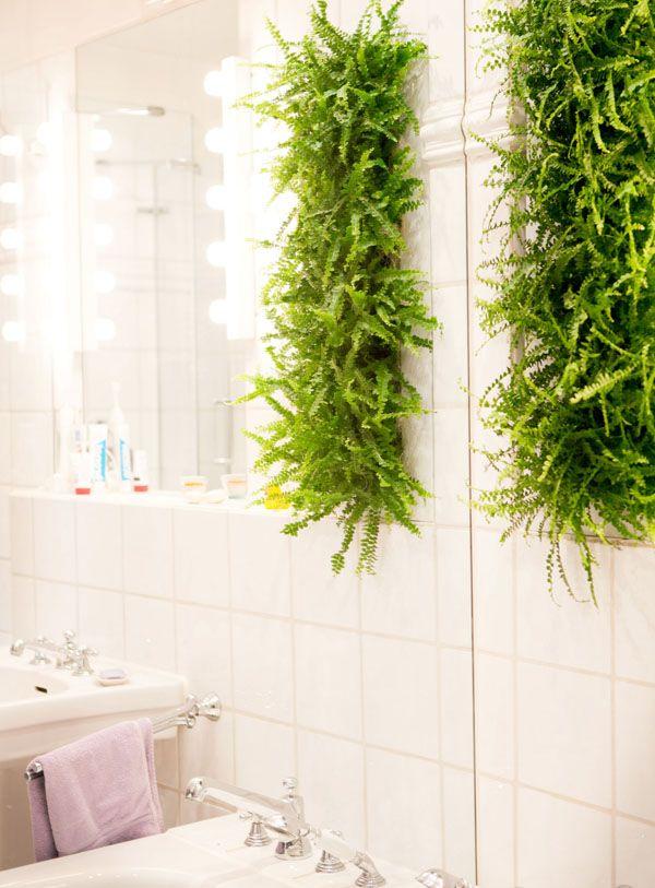 Foto GPP\/Wallflower Indoor Green Pinterest - pflanzen für badezimmer